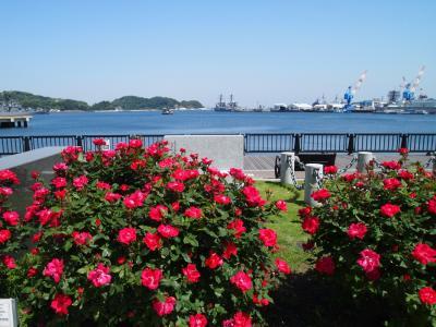 2018 GWぶらりグルメ散歩(1)~横須賀 薔薇と軍港