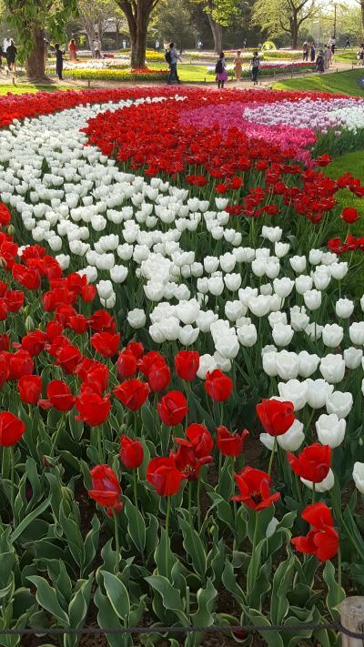 花、花、花そしてチューリップ