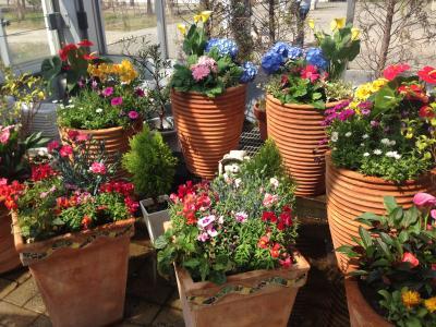 チューリップの花咲く道の駅