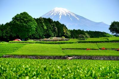茶畑と富士の絶景と白糸ノ滝をめぐる!