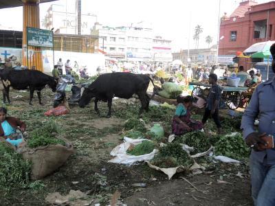 南インド2018・・・(13)バンガロール(その1) 巨大都市にも牛が シティ・マーケットの賑わい