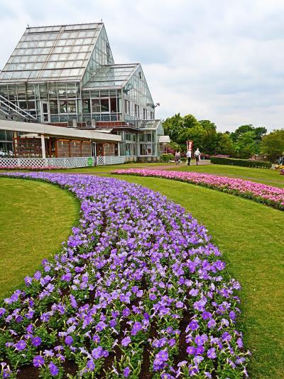 野田-1 花ファンタジア 前花壇・温室など ☆見ごろの花が盛りだくさん