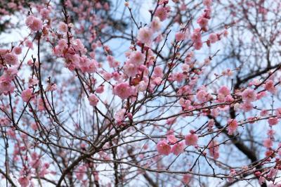春の先触れ~梅見でのほほん温泉旅♨️