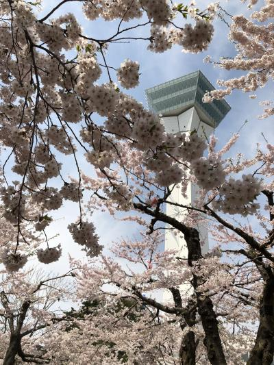桜満開🌸🌸🌸