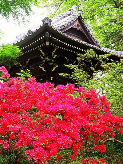 野田-7 慈光山金乗院に参拝 野田最古の寺院 ☆仁王門は平成に塗り替え