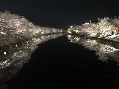 2018  桜旅   弘前  夜桜  弘前公園  弘前城  桜のトンネル  2日目後半