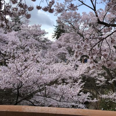 長野・山梨・神奈川 日本百名城とお花見の旅 1日目