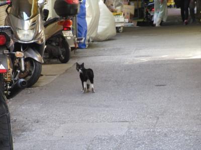 猫探し【沖縄(座間味島・Zamami Is)編】