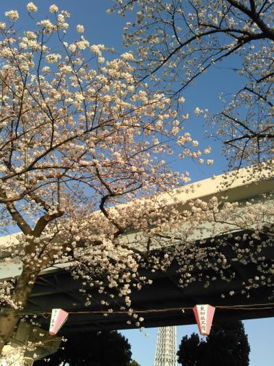 隅田川でお花見