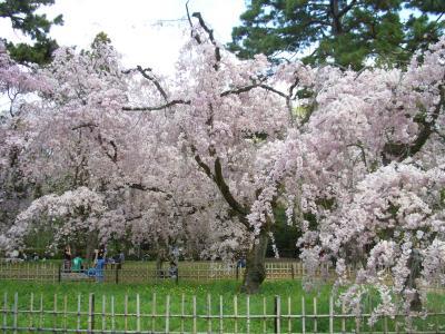 桜いろいろ2018