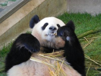 パンダに会いに南紀まで行ってきました。