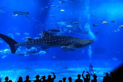 やっと到着、美ら海水族館