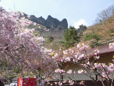 伊香保温泉と桜を求めて・・!