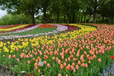 木曽三川公園センター<チューリップ祭> & 三ツ又池公園<シバザクラ>