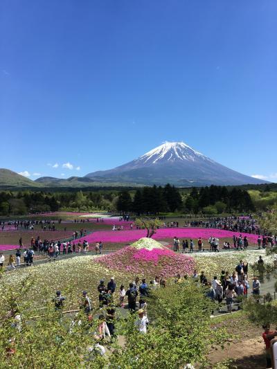 ゴールデンウィークの大渋滞に巻き込まれ現地滞在1時間弱の富士芝桜まつり観光!
