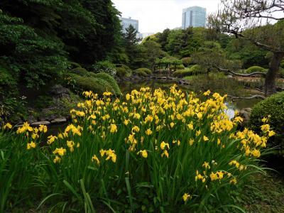 2017年5月 東京3日目 その2 新宿御苑 日本庭園とイギリス風景式庭園、大温室