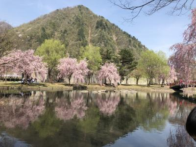 池に映る桜と山