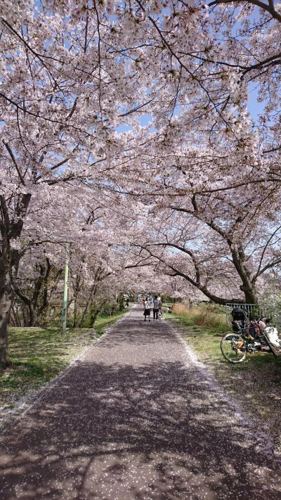 桜トンネル、いちご狩りへ