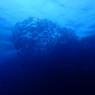 本島南部・粟国島ダイビング旅行