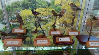 万博公園へポピーを見に行く(5) 自然観察学習館の野鳥展を見る。
