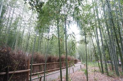 *18'5月GW。新緑が美しい♪王道ルートで周る一歳児連れ京都旅行記①。。。一日目の日中は、インスタ名物キモノフォレスト&憧れの竹林へ♪嵐山編