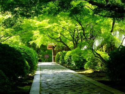 京田辺の一休寺から円町達磨寺そして等持院へ!2018年