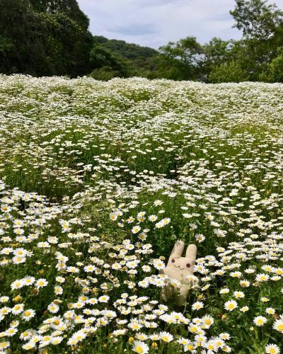 くりはま花の国に行ってみた。