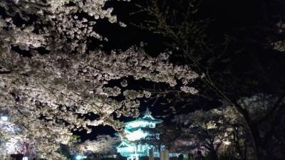 見逃した桜を追って