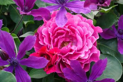 横浜イングリッシュガーデン 薔薇