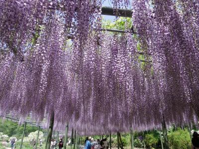 春爛漫 花を愛でるフラワーパーク