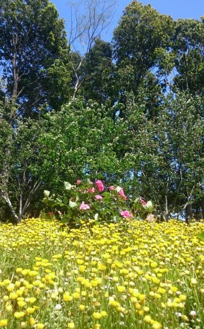 ハートマークの大花壇、3度目の横浜里山ガーデン