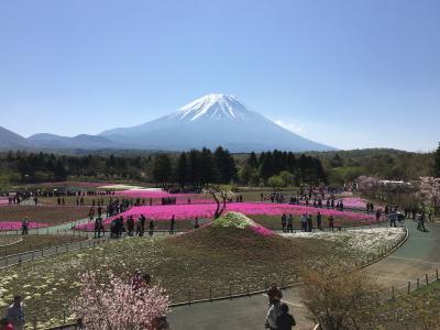 「春爛漫ネモフィラ・藤・つつじ・芝桜 を訪ねて」 第3日目