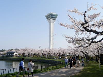 函館に桜を見に行く3-桜が満開の五稜郭 箱館奉行所