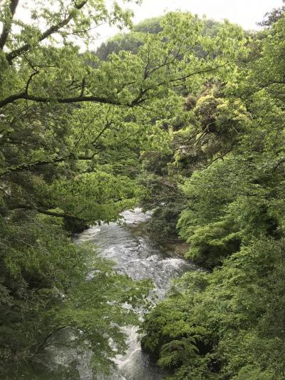 一人充電日帰り旅 新緑の山里と温泉を満喫