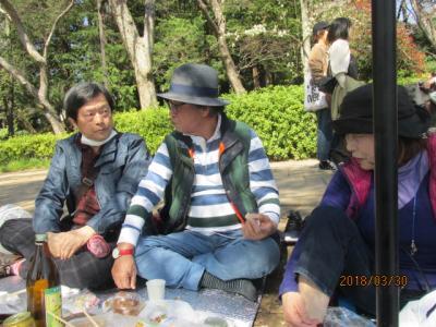 東京100景(8)野川―小金井ー井之頭、花見会。