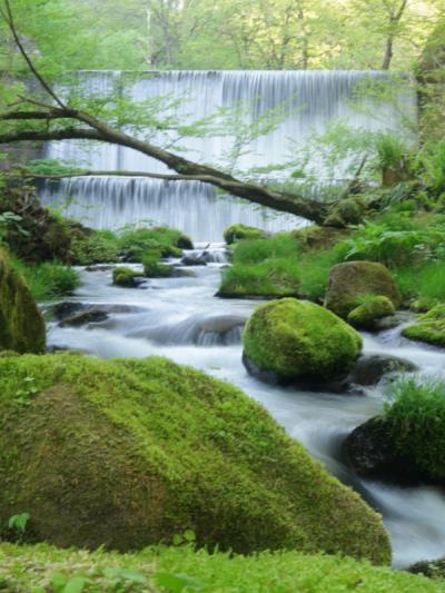 新緑の奥出雲散策と大根島の牡丹鑑賞の旅 3-1奥出雲・木谷沢渓流 編