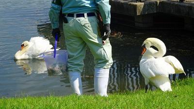 昆陽池公園の中を散策する。