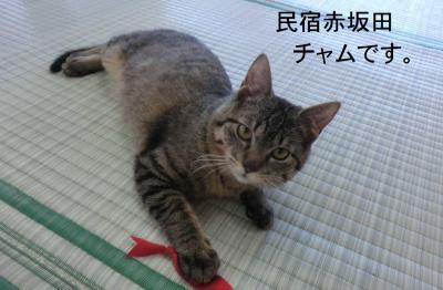 冬の民宿赤坂田逗留記・その1.赤坂田に新入りネコが入ったよ。