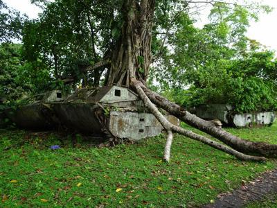 メラネシアの島めぐり(5) ソロモン諸島のガダルカナル島