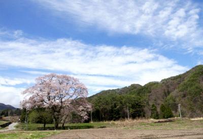 遅がけながら信州へ桜の花見に出かけました(読売旅行写真倶楽部)