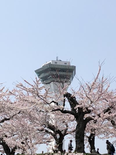 2018 桜旅 4日目 函館 五稜郭  五稜郭タワー  最後の最後に・・・・