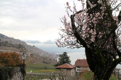 自由気ままな無計画旅行 その3 奇跡的に晴れたレマン湖、ラヴォー地区