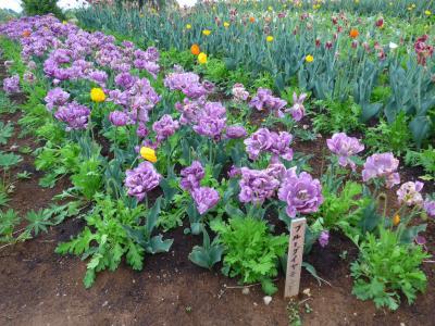 那須高原で綺麗に咲く沢山の花を見てきました!! O(*^-^*)O ~那須フラワーワールド編~