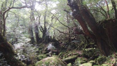 2018春 屋久島でひたすら歩く!②白谷雲水峡で癒やされる