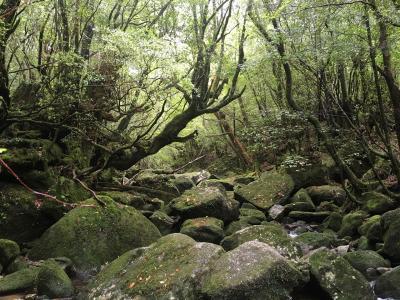 屋久島の自然と宇宙への玄関、種子島を巡る旅(その3)白谷雲水峡と屋久島観光編