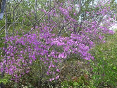 那須高原で綺麗に咲く沢山の花を見てきました!! O(*^-^*)O ~那須平成の森編~