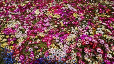 宝塚市の街歩き 安倉フラワーガーデンに咲くお花。