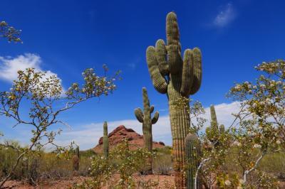 グランドサークル旅行記5 vol.2 砂漠植物園の生き物たちに驚愕