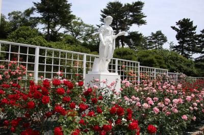 香り立つ春バラを楽しむ@生田緑地ばら苑
