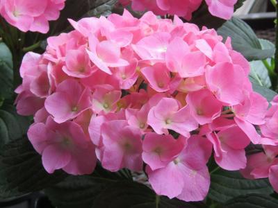 今年も箱根観光の旅を行う④箱根湿性花園へ・・その1・湿性花園入り口付近の山野草